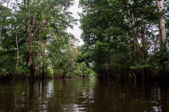 Amazon lakes