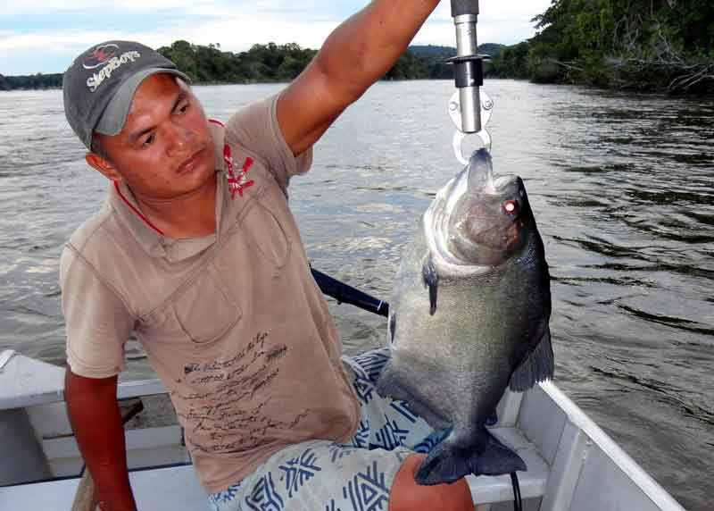 caught piranha