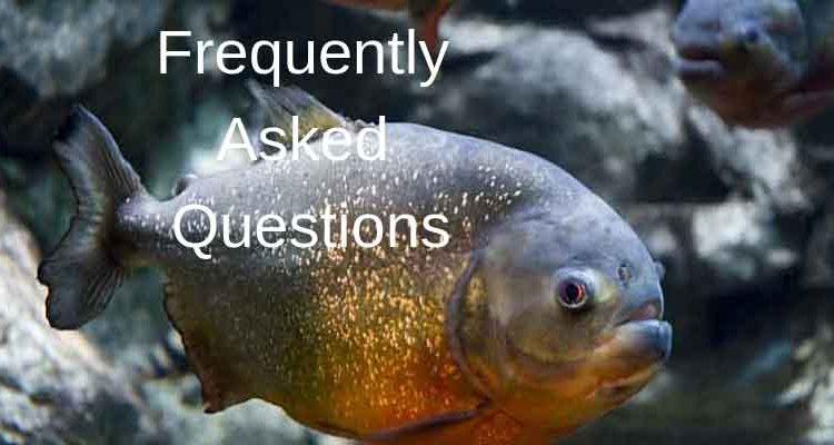 FAQ title about piranha
