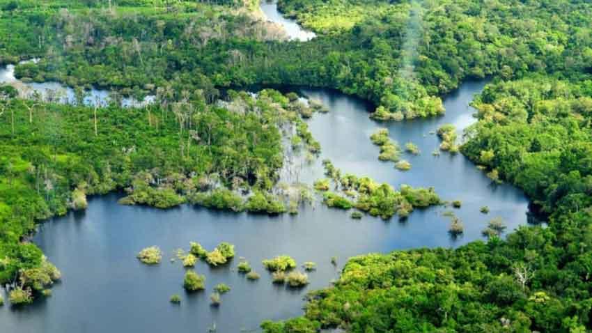 Aerial view of amazon floodplain