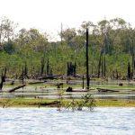 The Piranha Habitat - Where In The Amazon Do They Prefer to Live