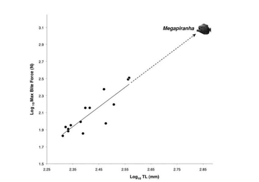megapiranha bite force graph
