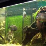The Piranha Tank Setup - A Beginners Guide
