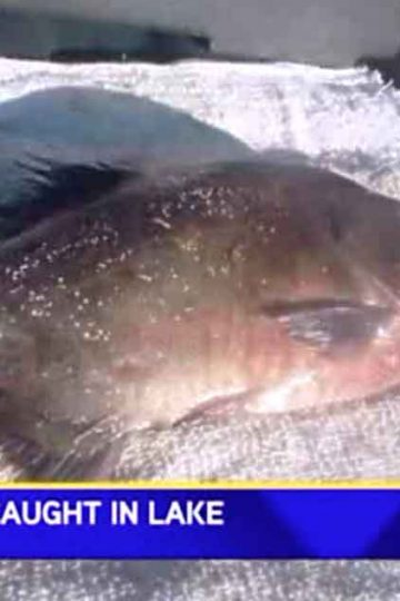 piranha caught in lake