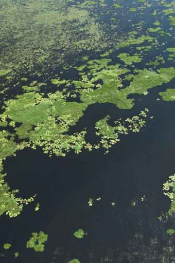 aerial view of amazon lake