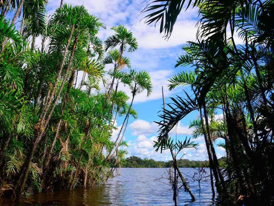 water level view of amazon lake