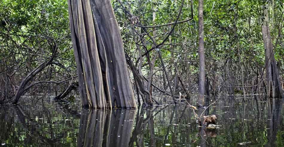 a flooded amazon rainforest