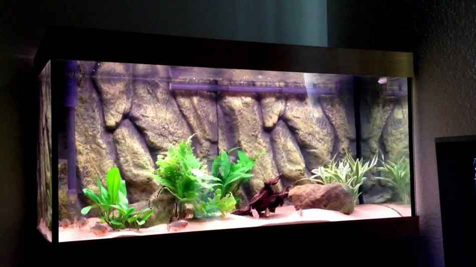 a piranha aquarium tank
