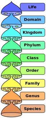 taxonomic rank zoology