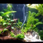 Can Piranhas Live In A 10 Gallon Tank