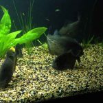 The Top 13 Signs of Normal/Abnormal Behavior For Piranha