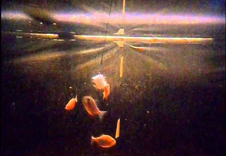 piranha and prawns aquarium